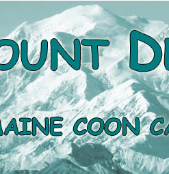 Welkom - Maine coon cattery Mount Denali